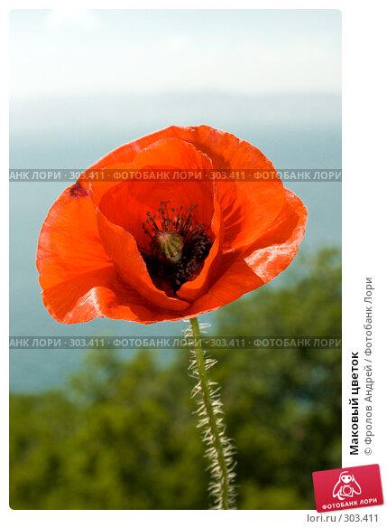 Маковый цветок, фото № 303411, снято 18 мая 2008 г. (c) Фролов Андрей / Фотобанк Лори
