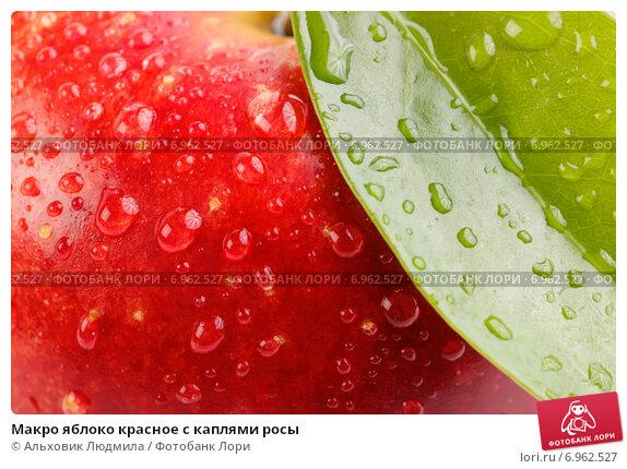 Макро яблоко красное с каплями росы. Стоковое фото, фотограф Альховик Людмила / Фотобанк Лори