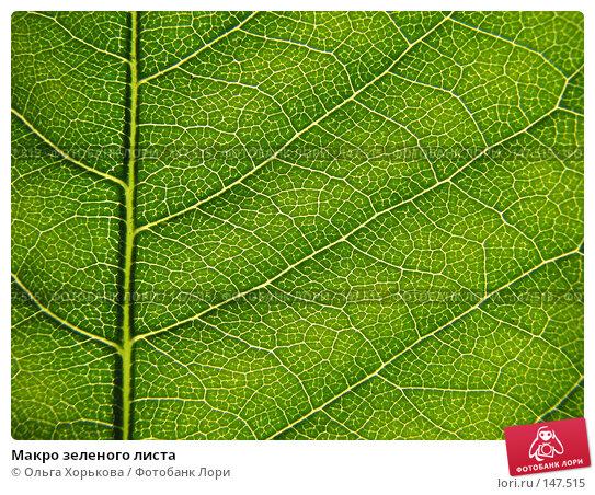 Макро зеленого листа, фото № 147515, снято 13 августа 2007 г. (c) Ольга Хорькова / Фотобанк Лори