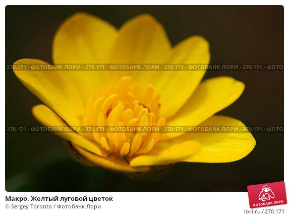 Макро. Желтый луговой цветок, фото № 270171, снято 1 мая 2008 г. (c) Sergey Toronto / Фотобанк Лори