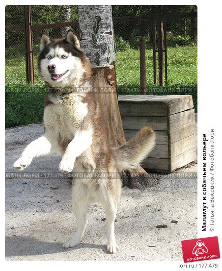 Маламут в собачьем вольере, фото № 177479, снято 30 августа 2007 г. (c) Татьяна Высоцких / Фотобанк Лори