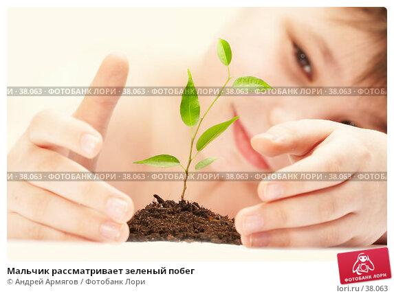 Купить «Мальчик рассматривает зеленый побег», фото № 38063, снято 19 марта 2007 г. (c) Андрей Армягов / Фотобанк Лори