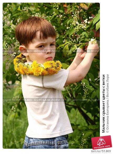 Мальчик срывает цветы с ветки, фото № 51803, снято 20 мая 2007 г. (c) Останина Екатерина / Фотобанк Лори