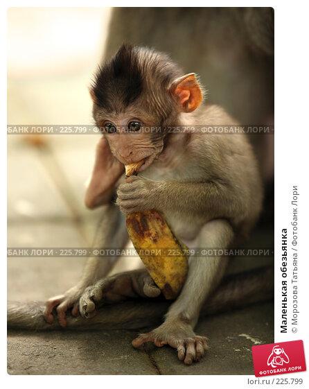 Маленькая обезьянка, фото № 225799, снято 24 февраля 2008 г. (c) Морозова Татьяна / Фотобанк Лори