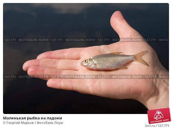 Купить «Маленькая рыбка на ладони», фото № 127771, снято 1 августа 2006 г. (c) Георгий Марков / Фотобанк Лори