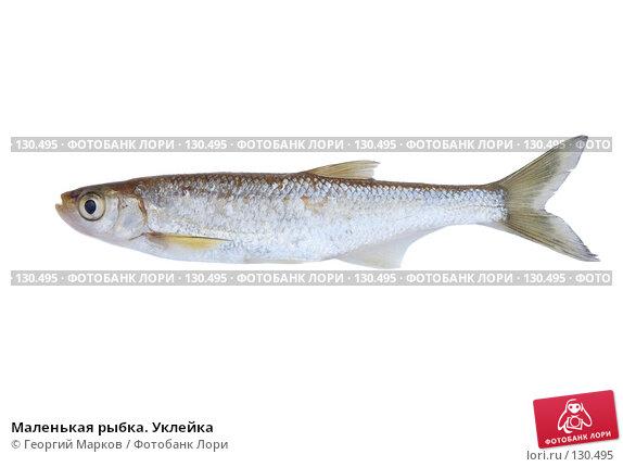 Маленькая рыбка. Уклейка, фото № 130495, снято 14 августа 2007 г. (c) Георгий Марков / Фотобанк Лори