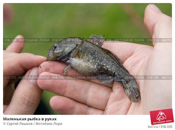 Маленькая рыбка в руках, фото № 318335, снято 18 мая 2008 г. (c) Сергей Лешков / Фотобанк Лори