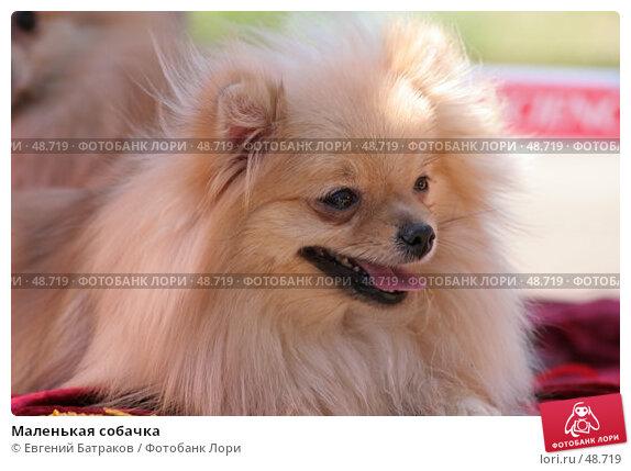 Маленькая собачка, фото № 48719, снято 19 мая 2007 г. (c) Евгений Батраков / Фотобанк Лори