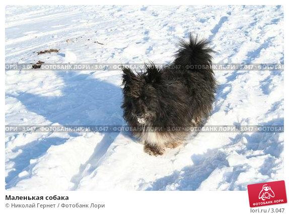 Маленькая собака, фото № 3047, снято 24 марта 2006 г. (c) Николай Гернет / Фотобанк Лори