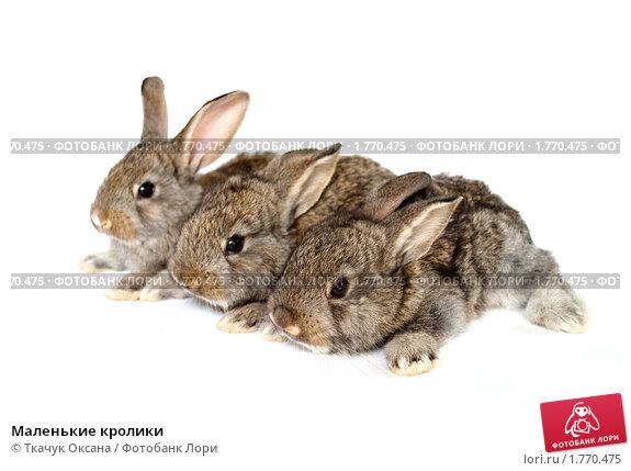 Купить «Маленькие кролики», фото № 1770475, снято 13 июня 2010 г. (c) Ткачук Оксана / Фотобанк Лори