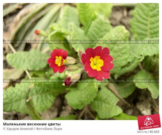 Маленькие весенние цветы, фото № 40643, снято 18 апреля 2007 г. (c) Удодов Алексей / Фотобанк Лори