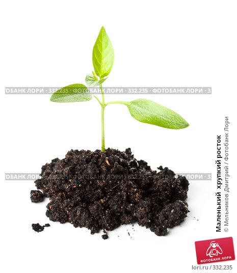 Купить «Маленький  хрупкий росток», фото № 332235, снято 28 мая 2008 г. (c) Мельников Дмитрий / Фотобанк Лори