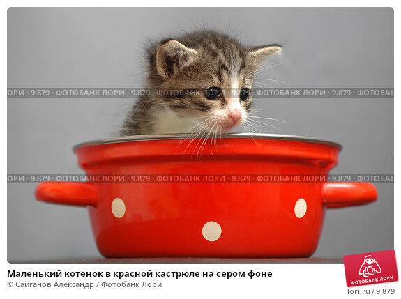Купить «Маленький котенок в красной кастрюле на сером фоне», фото № 9879, снято 17 января 2005 г. (c) Сайганов Александр / Фотобанк Лори