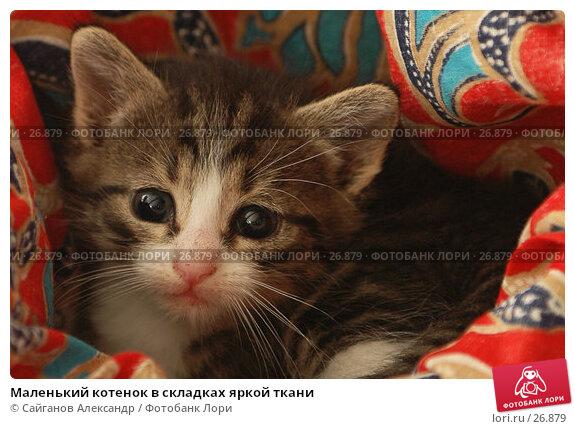 Маленький котенок в складках яркой ткани, фото № 26879, снято 17 января 2005 г. (c) Сайганов Александр / Фотобанк Лори