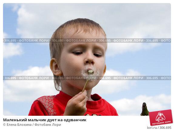 Маленький мальчик дует на одуванчик, фото № 306695, снято 27 мая 2008 г. (c) Елена Блохина / Фотобанк Лори