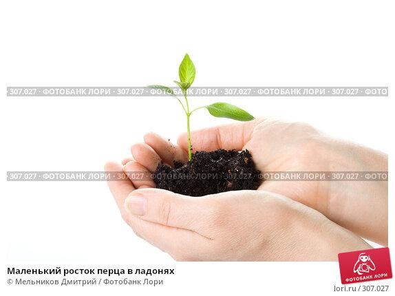 Купить «Маленький росток перца в ладонях», фото № 307027, снято 28 мая 2008 г. (c) Мельников Дмитрий / Фотобанк Лори