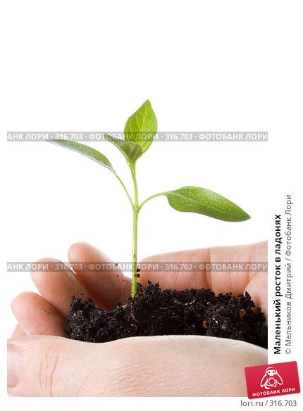 Купить «Маленький росток в ладонях», фото № 316703, снято 28 мая 2008 г. (c) Мельников Дмитрий / Фотобанк Лори