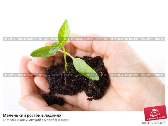 Маленький росток в ладонях, фото № 317815, снято 28 мая 2008 г. (c) Мельников Дмитрий / Фотобанк Лори