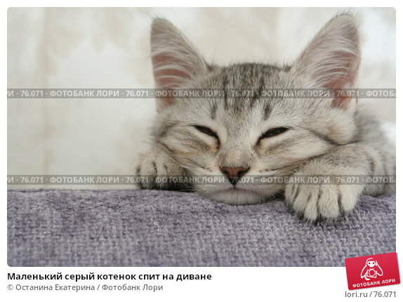 Маленький серый котенок спит на диване, фото № 76071, снято 21 августа 2007 г. (c) Останина Екатерина / Фотобанк Лори