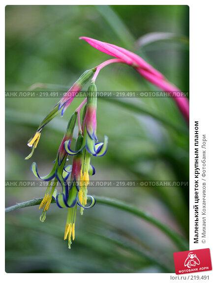 Маленький цветок крупным планом, фото № 219491, снято 1 марта 2008 г. (c) Михаил Коханчиков / Фотобанк Лори