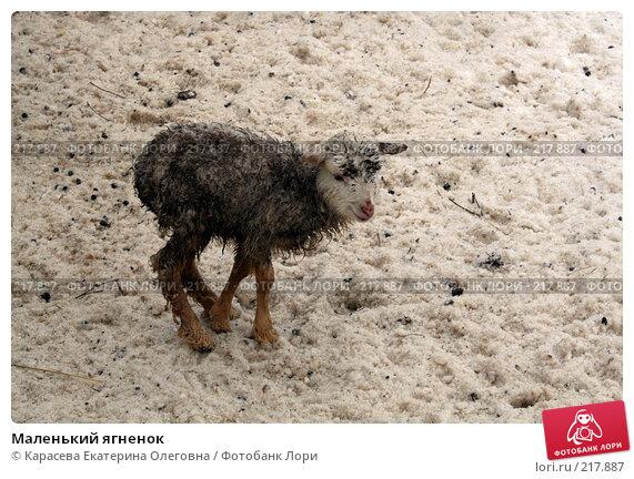 Маленький ягненок, фото № 217887, снято 2 февраля 2008 г. (c) Карасева Екатерина Олеговна / Фотобанк Лори