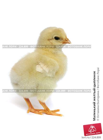 Маленький желтый цыпленок, фото № 224899, снято 24 мая 2007 г. (c) Останина Екатерина / Фотобанк Лори
