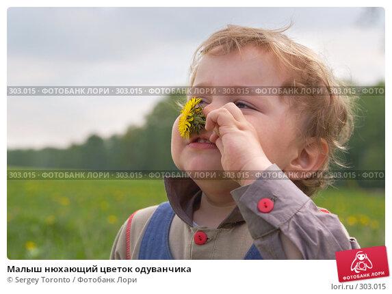 Малыш нюхающий цветок одуванчика, фото № 303015, снято 11 мая 2008 г. (c) Sergey Toronto / Фотобанк Лори