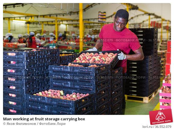 Man working at fruit storage carrying box. Стоковое фото, фотограф Яков Филимонов / Фотобанк Лори
