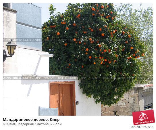 Мандариновое дерево. Кипр, фото № 192515, снято 17 апреля 2006 г. (c) Юлия Селезнева / Фотобанк Лори