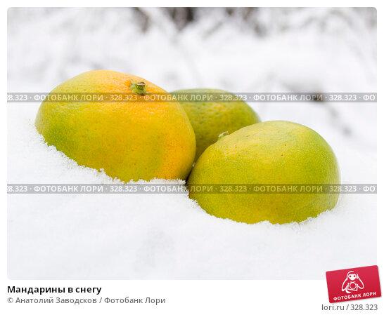 Купить «Мандарины в снегу», фото № 328323, снято 11 ноября 2006 г. (c) Анатолий Заводсков / Фотобанк Лори