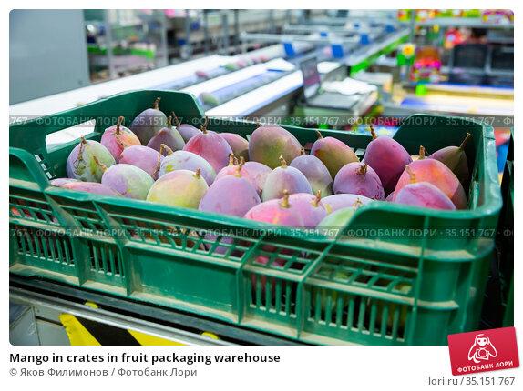 Mango in crates in fruit packaging warehouse. Стоковое фото, фотограф Яков Филимонов / Фотобанк Лори