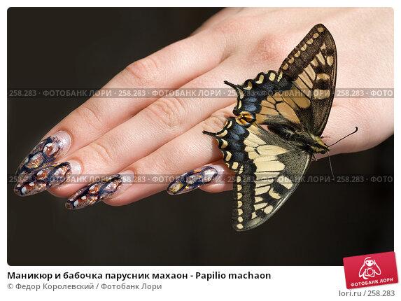 Маникюр и бабочка парусник махаон - Papilio machaon, фото № 258283, снято 21 апреля 2008 г. (c) Федор Королевский / Фотобанк Лори