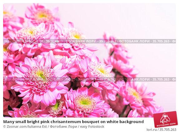 Many small bright pink chrisantemum bouquet on white background. Стоковое фото, фотограф Zoonar.com/Iulianna Est / easy Fotostock / Фотобанк Лори