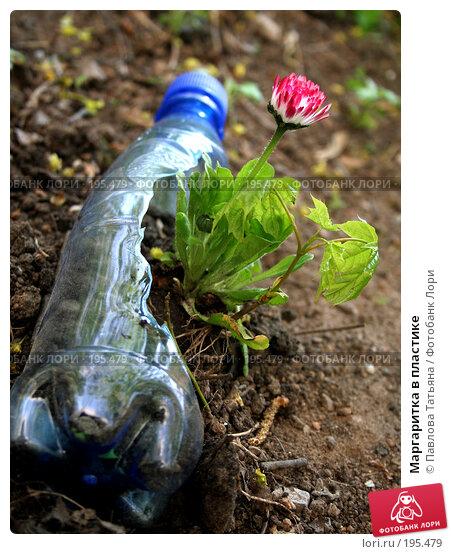 Маргаритка в пластике, фото № 195479, снято 10 мая 2007 г. (c) Павлова Татьяна / Фотобанк Лори