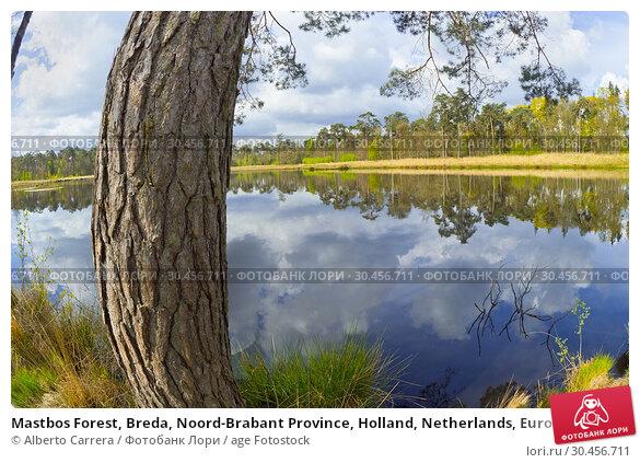 Mastbos Forest, Breda, Noord-Brabant Province, Holland, Netherlands, Europe. Стоковое фото, фотограф Alberto Carrera / age Fotostock / Фотобанк Лори