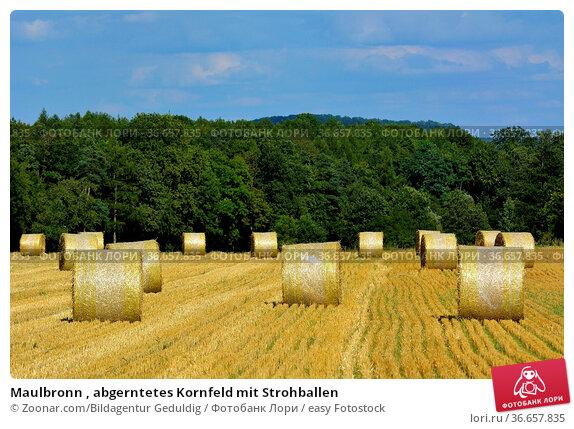 Maulbronn , abgerntetes Kornfeld mit Strohballen. Стоковое фото, фотограф Zoonar.com/Bildagentur Geduldig / easy Fotostock / Фотобанк Лори