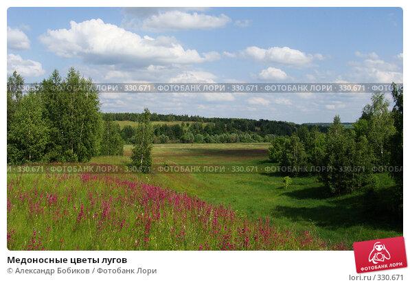 Купить «Медоносные цветы лугов», фото № 330671, снято 14 июня 2008 г. (c) Александр Бобиков / Фотобанк Лори