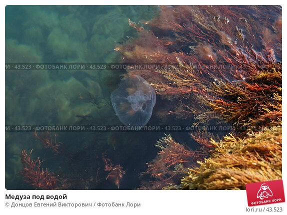 Медуза под водой, фото № 43523, снято 10 августа 2006 г. (c) Донцов Евгений Викторович / Фотобанк Лори