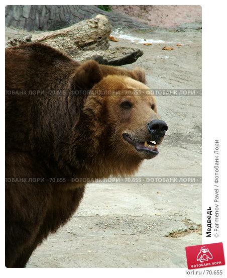 Медведь, фото № 70655, снято 7 мая 2005 г. (c) Parmenov Pavel / Фотобанк Лори