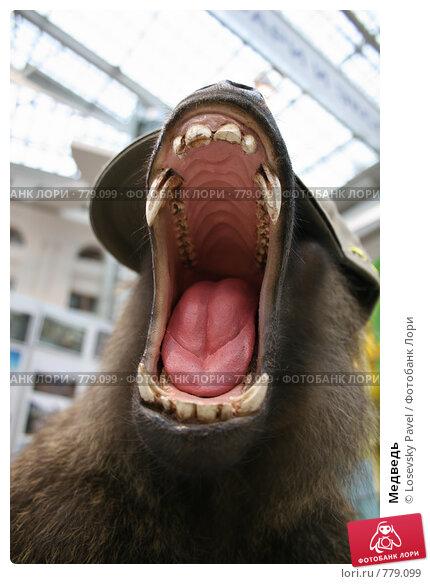 Купить «Медведь», фото № 779099, снято 23 февраля 2019 г. (c) Losevsky Pavel / Фотобанк Лори