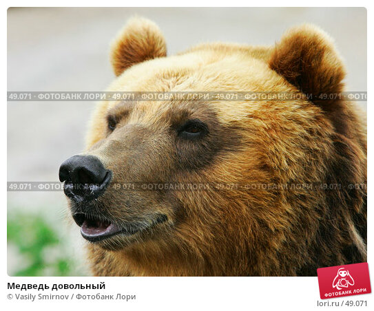 Медведь довольный, фото № 49071, снято 9 июля 2005 г. (c) Vasily Smirnov / Фотобанк Лори
