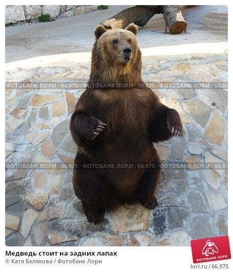 Медведь стоит на задних лапах, фото № 66975, снято 23 июня 2007 г. (c) Катя Белякова / Фотобанк Лори