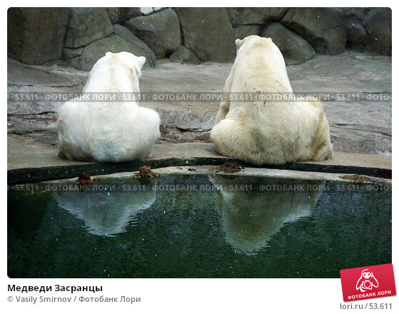 Медведи Засранцы, фото № 53611, снято 25 октября 2016 г. (c) Vasily Smirnov / Фотобанк Лори