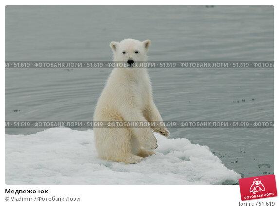 Медвежонок, фото № 51619, снято 11 июля 2006 г. (c) Vladimir / Фотобанк Лори