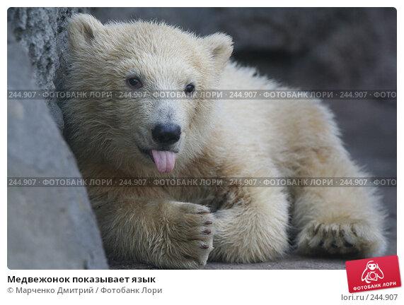 Медвежонок показывает язык, фото № 244907, снято 22 марта 2008 г. (c) Марченко Дмитрий / Фотобанк Лори