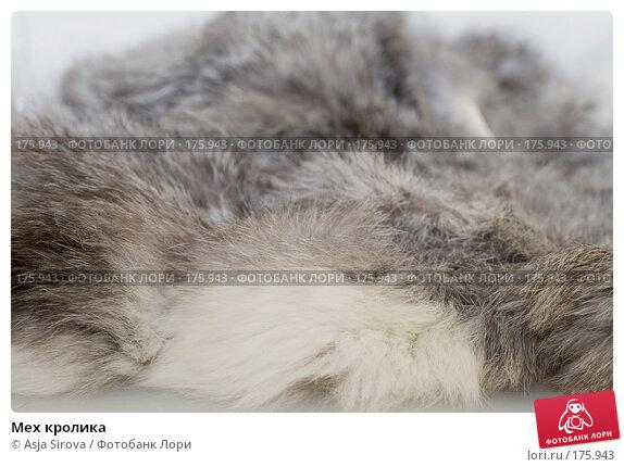 Мех кролика, фото № 175943, снято 13 января 2008 г. (c) Asja Sirova / Фотобанк Лори