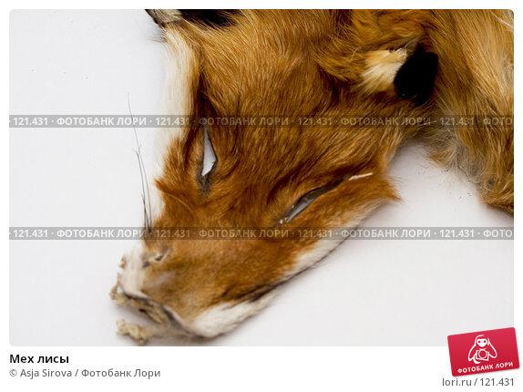 Мех лисы, фото № 121431, снято 19 ноября 2007 г. (c) Asja Sirova / Фотобанк Лори