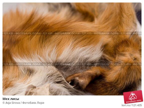 Мех лисы, фото № 121435, снято 19 ноября 2007 г. (c) Asja Sirova / Фотобанк Лори