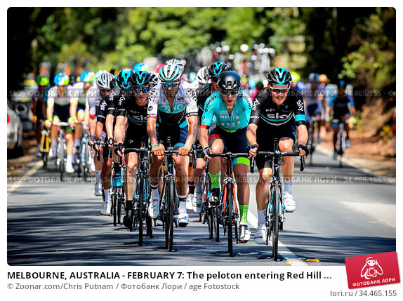 MELBOURNE, AUSTRALIA - FEBRUARY 7: The peloton entering Red Hill ... Стоковое фото, фотограф Zoonar.com/Chris Putnam / age Fotostock / Фотобанк Лори