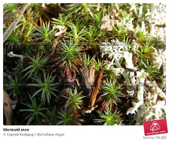 Мелкий мох, фото № 18203, снято 15 апреля 2006 г. (c) Сергей Ксейдор / Фотобанк Лори
